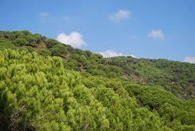 pinedes verdes